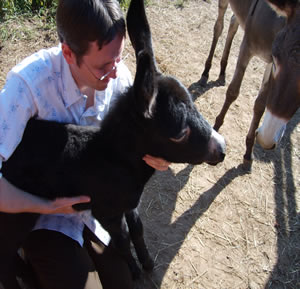 Family Petting Donkey At Arkansas Frontier Pumpkin Patch
