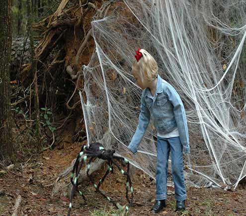 Spider Web On Enchanted Forest