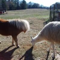 Watch the Farm Animals