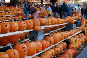 Pumpkin Patches of the 21st Century
